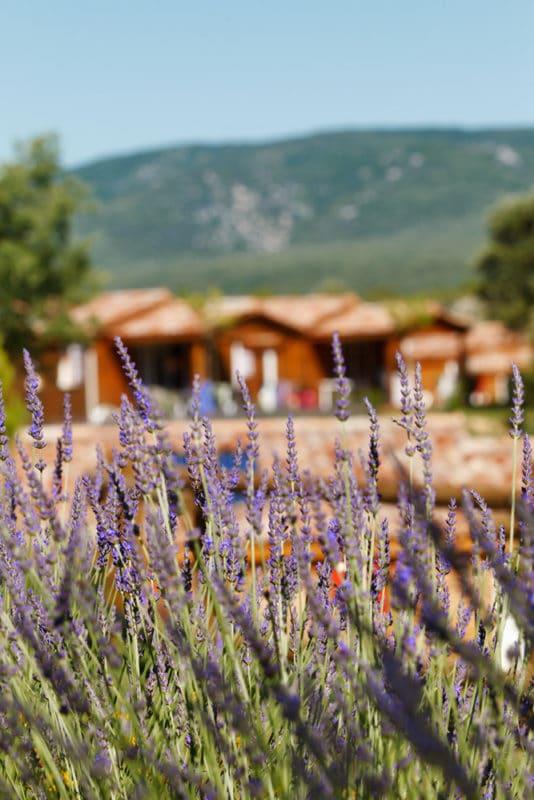 domaine sevenier camping location vacance en ardeche chalet chene vert 8 534x800 - Galeries